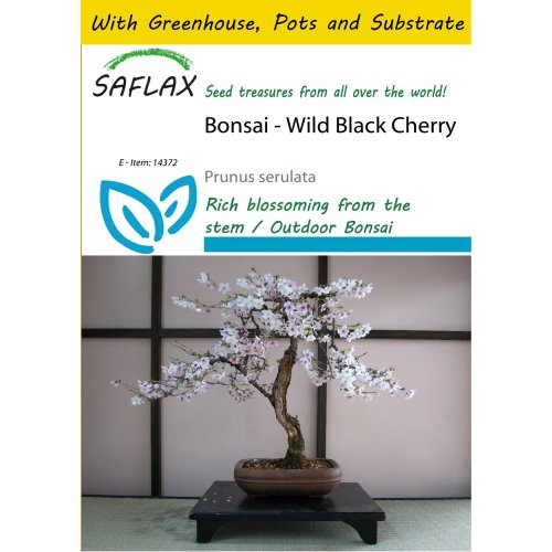 Saflax Potting Set - Bonsai - Wild Black Cherry - Prunus Serulata - 30 Seeds - with Mini Greenhouse, Potting Substrate and 2 Pots