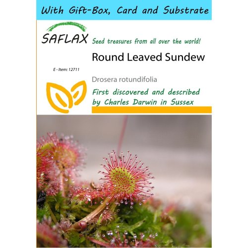 Saflax Gift Set - Round Leaved Sundew - Drosera Rotundifolia - 50 Seeds - with Gift Box, Card, Label and Potting Substrate