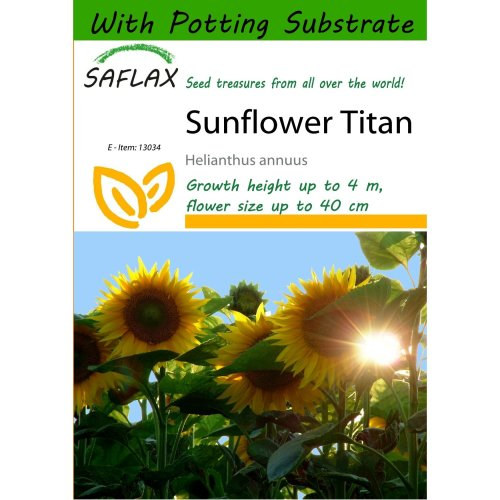 Saflax  - Sunflower Titan - Helianthus Annuus  - 20 Seeds - with Potting Substrate for Better Cultivation