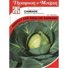 Thompson & Morgan - Vegetables - Cabbage Minicole F1 Hybrid - 40 Seed