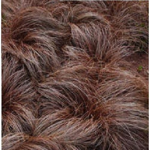 Grass - Carex Species Mix - 600 Seeds
