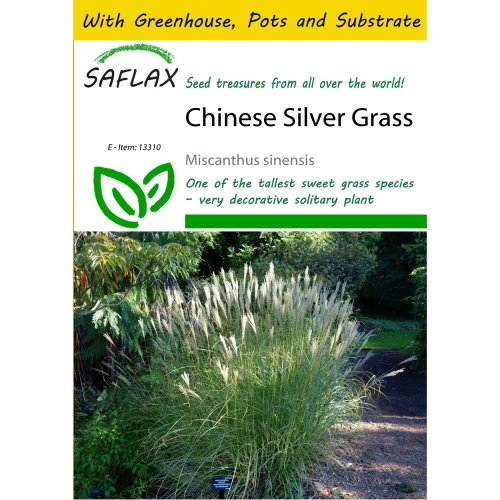 Saflax Potting Set - Chinese Silver Grass - Miscanthus Sinensis - 200 Seeds - with Mini Greenhouse, Potting Substrate and 2 Pots