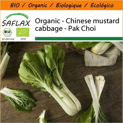 SAFLAX Garden in the Bag - Organic - Chinese mustard cabbage - Pak Choi - 300 certified organic seeds  - Brassica