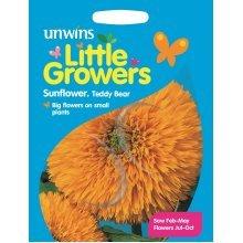 Unwins Pictorial Packet - Little Growers Sunflower Teddy Bear - 35 Seeds