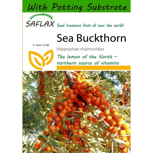 Saflax  - Sea Buckthorn - Hippophae Rhamnoides - 40 Seeds - with Potting Substrate for Better Cultivation