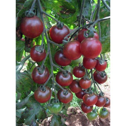 Vegetable - Tomato - Rosella F1 - 5 Seeds
