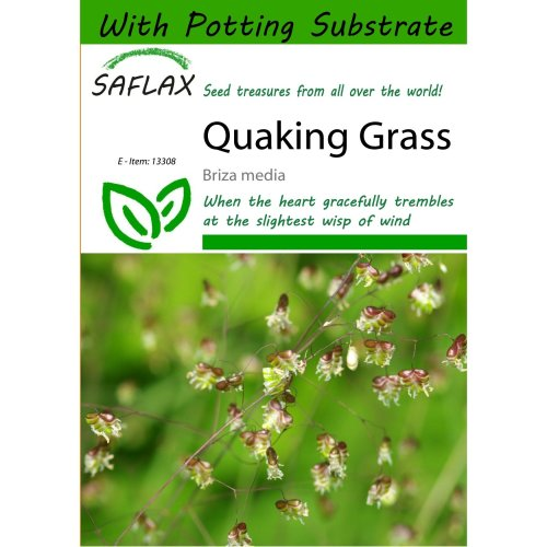 Saflax  - Quaking Grass - Briza Media - 75 Seeds - with Potting Substrate for Better Cultivation